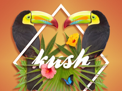 Kush Typography bird toucan toucans tropical kush marijuana cannabis