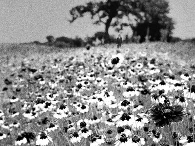 Flower Field WIP
