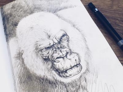 Gorilla sketch drawing pencil animal gorilla notebook fun