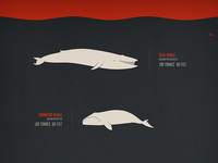 Whales Infographic Poster