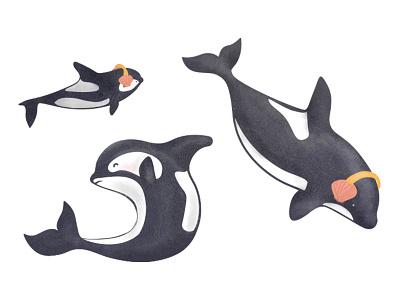 Orcas greenpeace shell fish orca seismic testing killer whale texture illustration