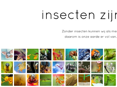 Insects thumbnails photos grid heading web ui