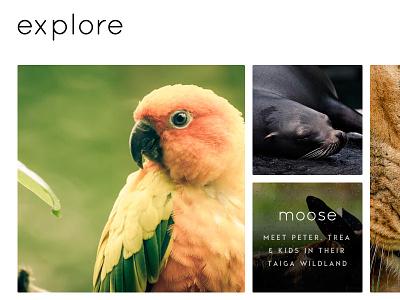 Animals animals photos thumbnails ui hover rounded bird