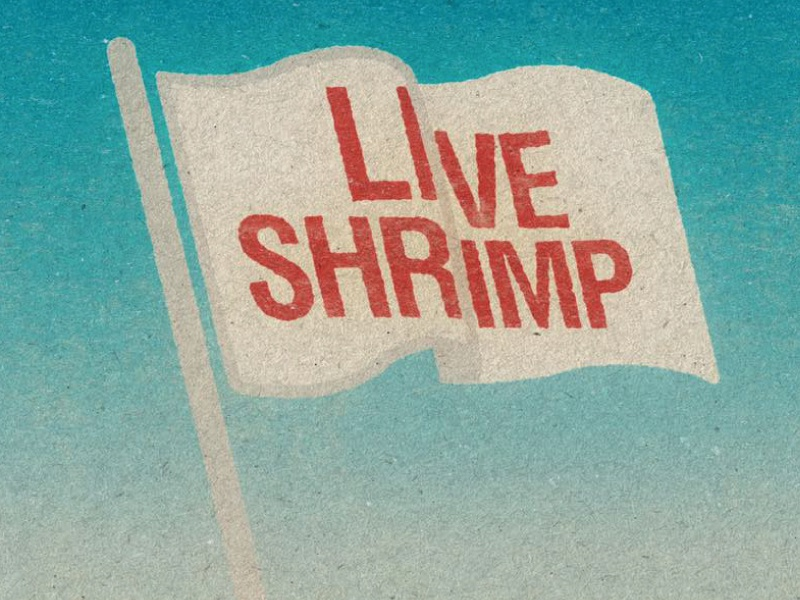 Live Shrimp! logo design identity branding illustration graphic design