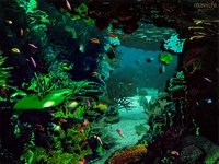 Colorful Seabed