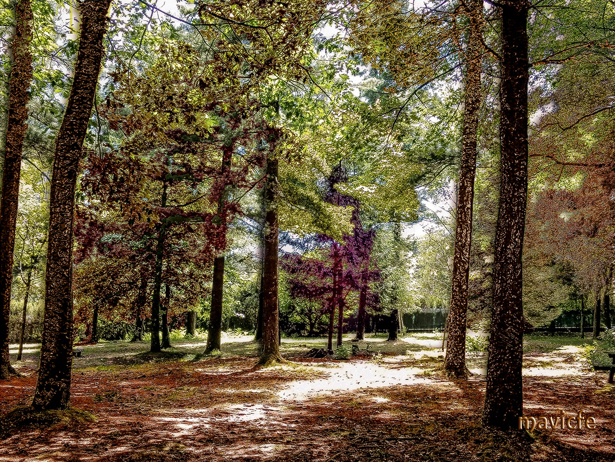 Autumn Forest In The Summertime mavicfe color otoño naturaleza bosque autumn forest photoshop art photography painting nature illustration art graphic design graphic art digital painting digital art composition illustration photoshop