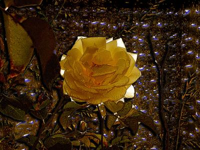 Colorful Garden Project 7 mavicfe golden photoshop art photography painting rosebud rose naturaleza jardín illustration art graphic design graphic art garden digital painting digital art abstract composition illustration photoshop