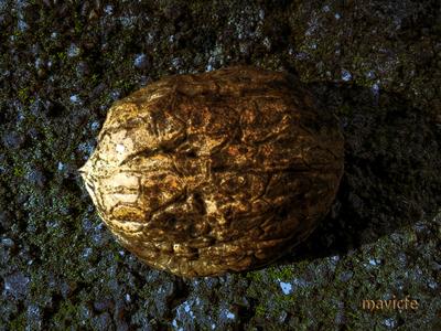 Golden Walnut Shell digital art graphic art golden shell granite abstract garden nature decorative ornament wallpaper rock stone background walnut nut design illustration mavicfe photoshop