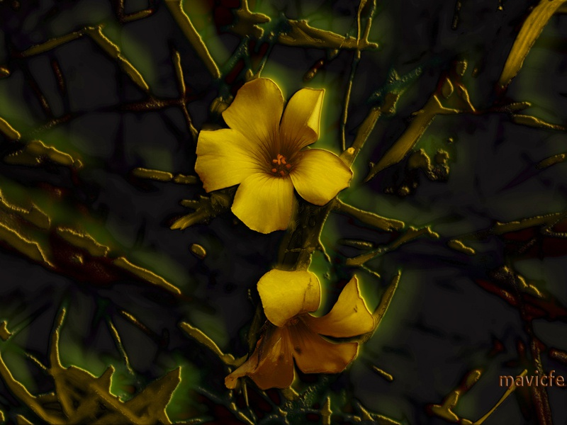 Flower Lattice fine art abstract bright lattice wallpaper petal painting nature graphic art garden flower digitalart dark closeup glow background design illustration mavicfe photoshop
