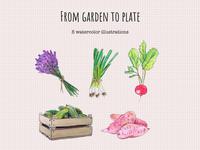 Some fresh stuff :) vegetables gardening royalty free etsy green onion radish sweet potatoes cucumber lavender watercolor illustration