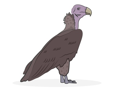 Vulture bird animal vulture zoo ai illustration vector illustrator