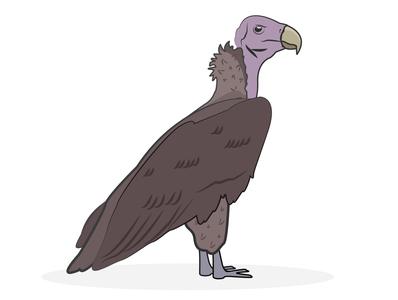 Vulture bird animal vulture zoo ai illustration vector illustrator
