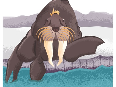 Walrus marine animal marine ocean walrus design graphic design ai vector illustration illustrator