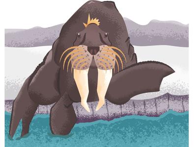 Walrus marine animal marine ocean walrus design graphic design ai vector illustration illustrator