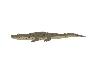 Cuban Crocodile
