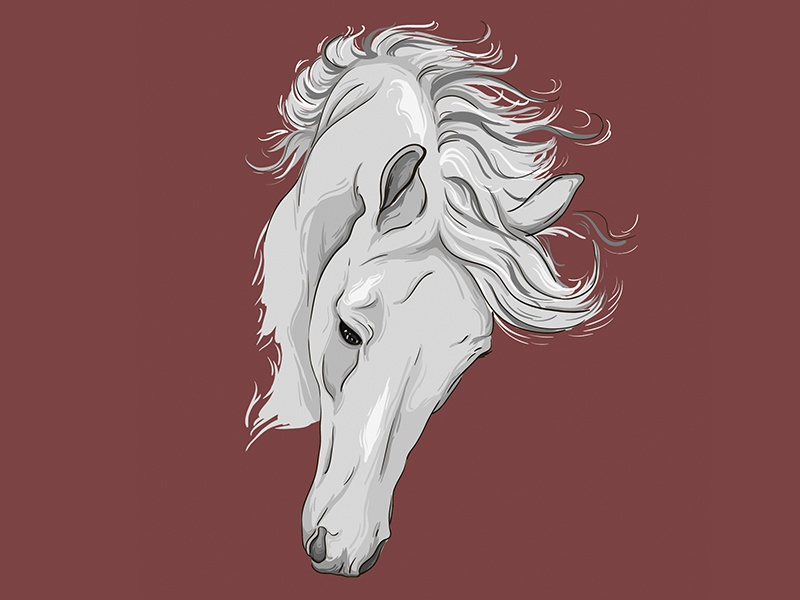 Horse illustration horse