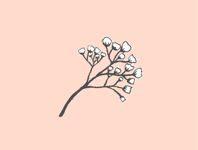 Baby's Breath soft flower illustrator