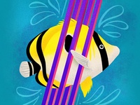 Indian Butterfly Fish