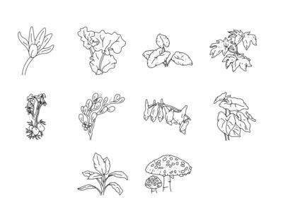Sinister Garden Booklet Illustrations