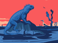 Marine iguana on Galápagoses