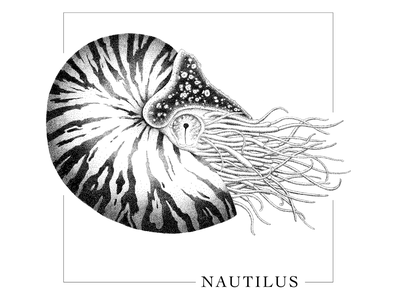 Nautilus drawing illustration black and white black  white dots dot animal sea seashell nautilus