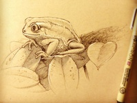 Quick Frog Sketch frog sketch draw drawing pen ink doodle