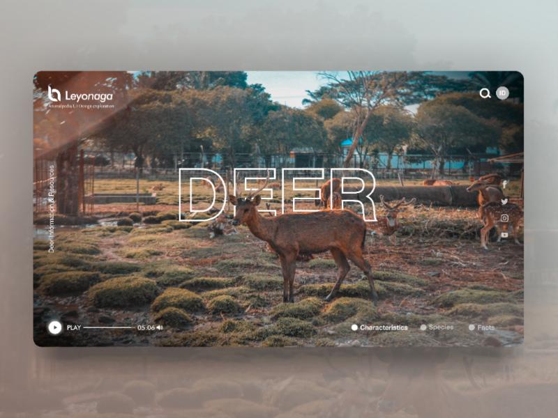 Deer Web UI Concept wiki deer web design nature animal web app branding ux ui illustration ardileyo