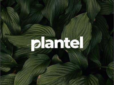 Plantel Logo Concept