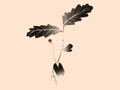 Vectober 10 - Hope vectober2020 leaf oak leaf oak acorn inktober vectober texture light black white colors illustration flat vector illustrator 2d