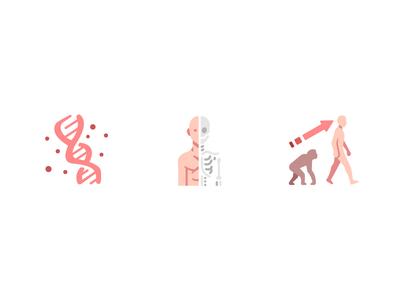 Science evolution skeleton dna design flat icons icon biology science