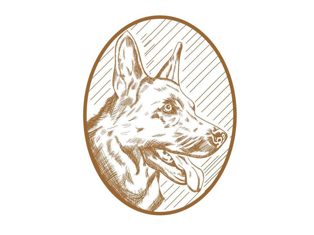 Dog vintage animal illustration drawing vector illustrator digital illustration digital design logo illustraion german shepherd shepherd dog pet dog
