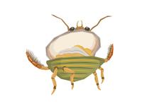 Water Clam Beetle