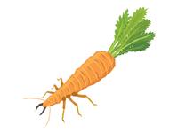 Carrot Termite