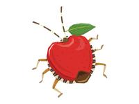 Apple Stinkbug