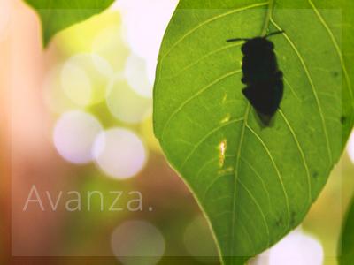 Avanza photo photography leaft nature green