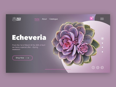 Internet-shop of succulents. concept