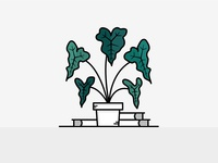 Dribble Weekly Warmup Illustrated Alocasia Amazonica Plant