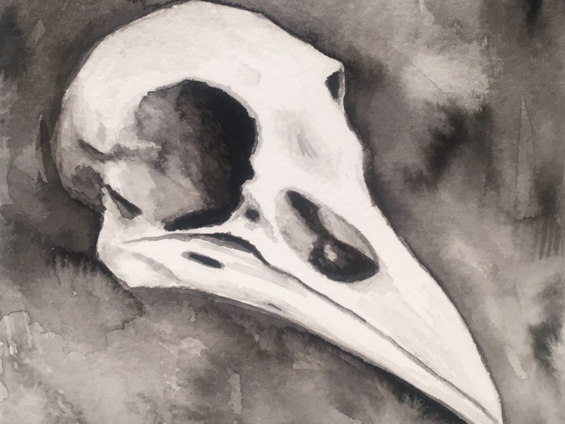 Raven Skull sketch creepy skull ink painting fine art drawing art illustration