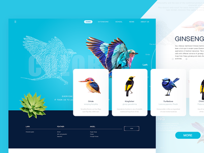 Invisible wings design angle lovely bird colour fly illustrations ui web