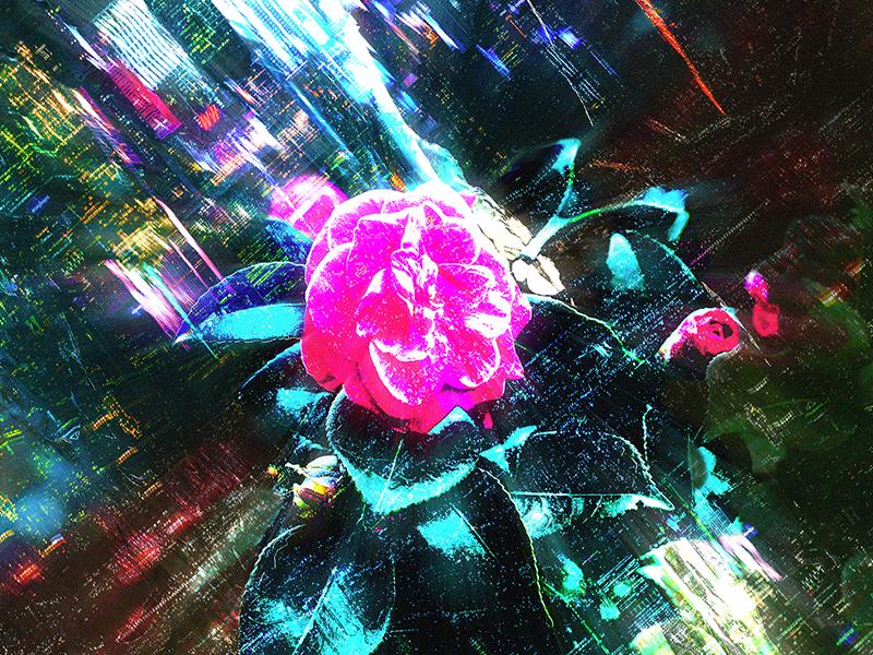 Urban Flora no. 1 photoshop lights neon flower city flora urban rose collage