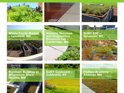 Recover Green Roof's Portfolio Selection work. search filter portfolio