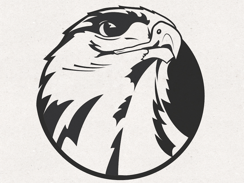 Hawk Mascot/Logo Design hawk eagle mascot logo sketch drawing graphic design