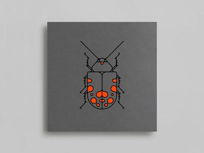 Coleoptera Beetles
