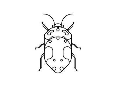 Coleoptera Beetles