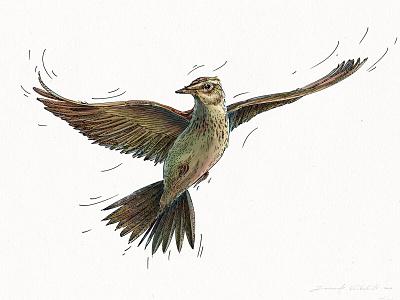 The light flight of ark digital illustration art wacom intuos bird design digital character design nature hand drawing graphic drawing illustration