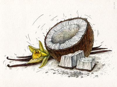 Coconut and vanilla (Veggo project) graphic digital 2d wacom intuos adobe photoshop .psd vanilla coconut food illustration digital illustration digital art digital hand drawing nature illustration drawing