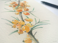 When we do not rush — we start to see the sea buckthorn