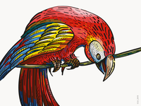 Illustration for Veggo brand. Scarlet macaw