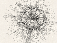 A graphic study of melon
