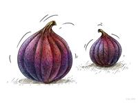 Two figs_illustration for Veggo brand